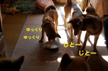 7_20090213010848.jpg