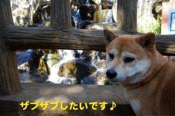 7_20090218170358.jpg