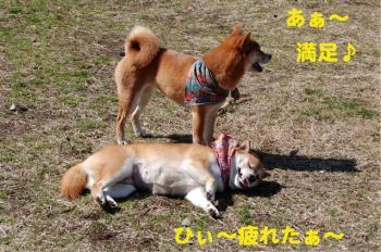 7_20090310215157.jpg