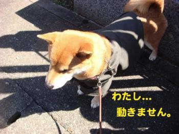 7_20090315224249.jpg