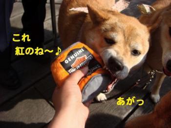 7_20090420080958.jpg