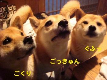7_20090430195551.jpg