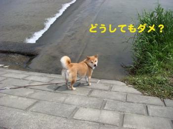 7_20090513230035.jpg
