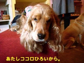 7_20090607203658.jpg