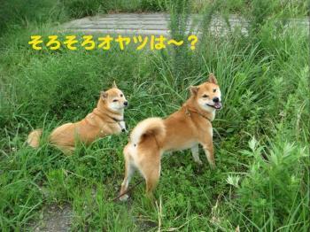 7_20090814191241.jpg