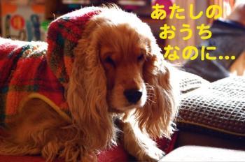 8_20090129030058.jpg