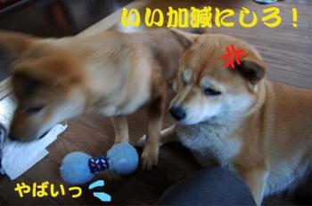 8_20090216183418.jpg