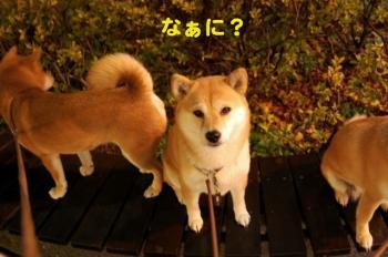 8_20090307001243.jpg