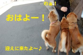 8_20090308002223.jpg