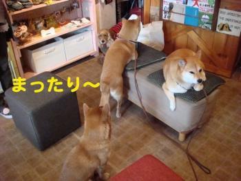 8_20090313235315.jpg