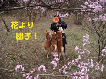 8_20090328215617.jpg
