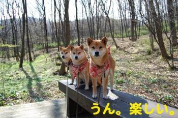 8_20090330183745.jpg