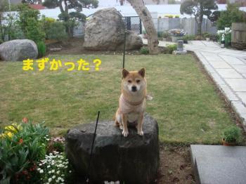 8_20090417230316.jpg