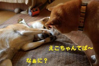 8_20090508222553.jpg