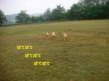8_20090605181846.jpg