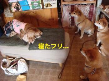 8_20090607204402.jpg