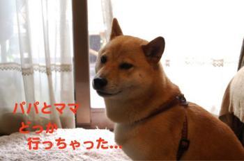 8_20090705214719.jpg
