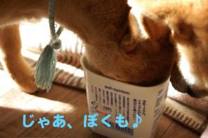 9_20090115202347.jpg