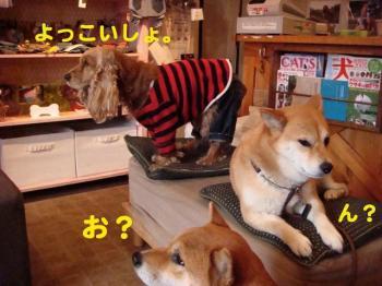 9_20090313235402.jpg