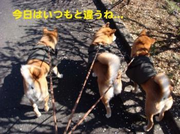 9_20090315202523.jpg