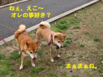 9_20090325234530.jpg