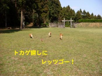 9_20090407231549.jpg