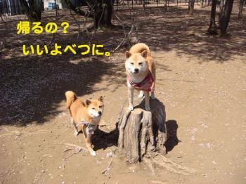 9_20090409214110.jpg