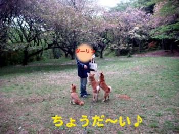 9_20090425204835.jpg
