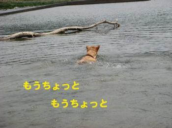 9_20090513230316.jpg