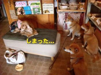 9_20090607204549.jpg
