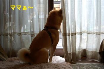 9_20090705214933.jpg