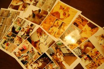 DSC_0036_20090301021851.jpg