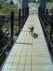エル吊り橋にて