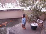暖かい温泉池の鯉
