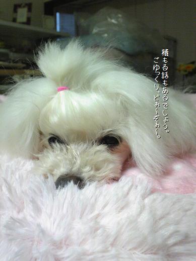 Image489a_20090726201947.jpg