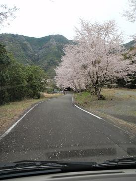 Aチーム桜