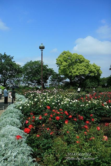 eIMG_3638港の見える丘公園