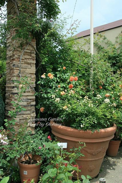 eIMG_9727komatsu garden
