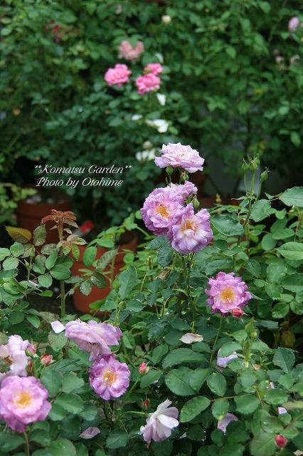 eIMG_9699komatsu garden