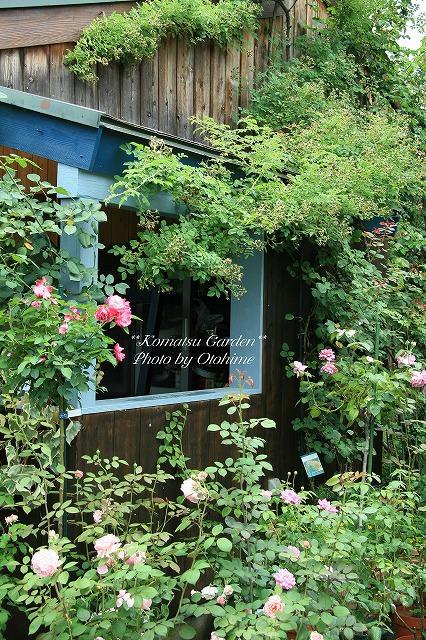eIMG_9701komatsu garden