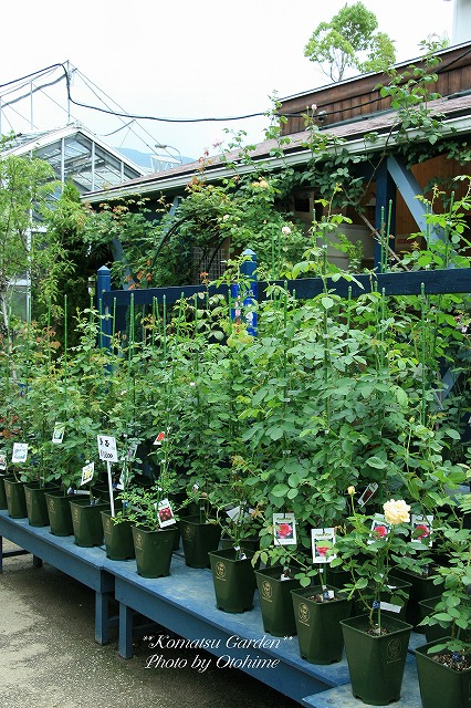 eIMG_9703komatsu garden