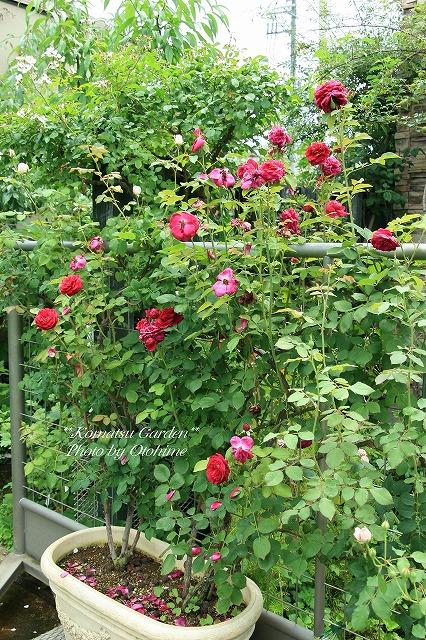 eIMG_9707komatsu garden