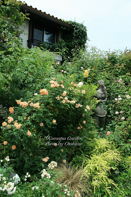 eIMG_9710komatsu garden