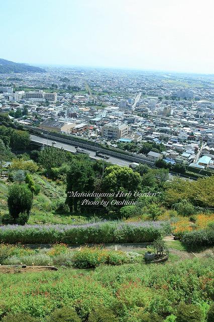 fIMG_1156松田山ハーブガーデン