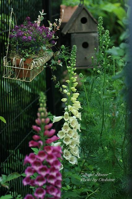eIMG_4422flower.jpg