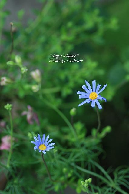 eIMG_8734flower.jpg