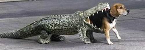 dogalligator.jpg