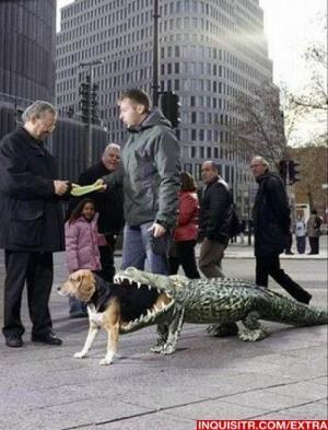 dogalligator3.jpg