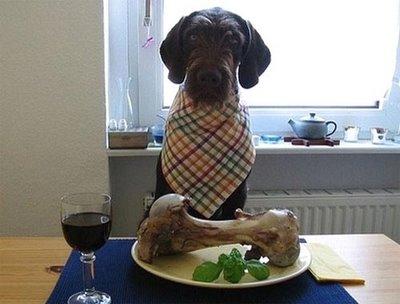 dog-dinner.jpg