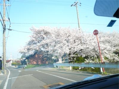 桜 2009.04.06